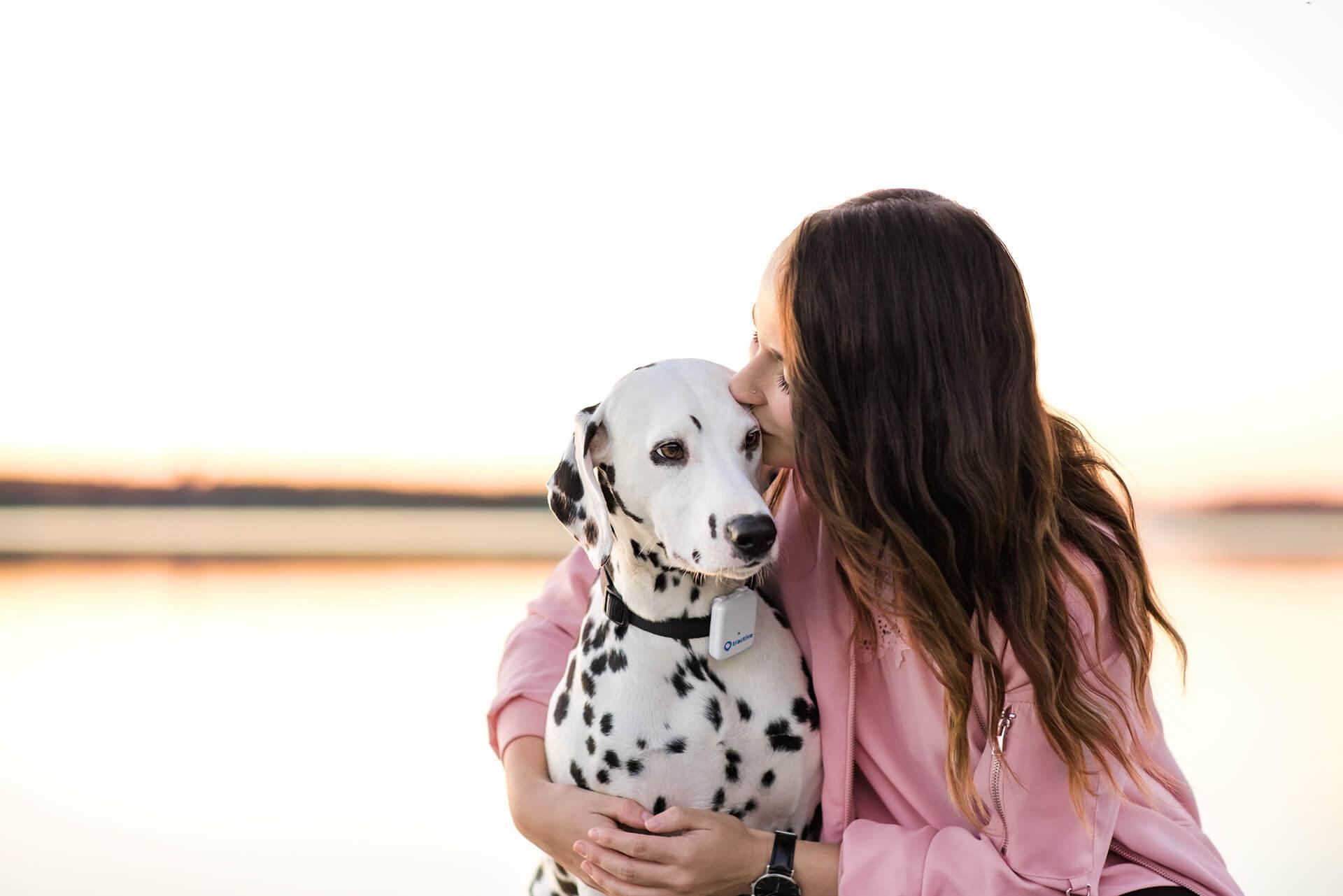Dalmatiner Charakter: Eigenschaften des Punkte-Hundes