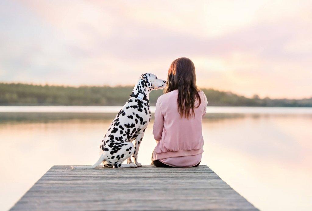 Dalmatiner: Charakter des beliebten Hundes auf einen Blick zusammengefasst