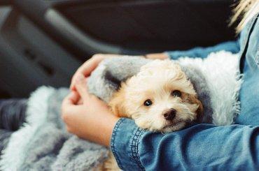 Depression bei Hunden zum Schulstart vermeiden mit kuscheln
