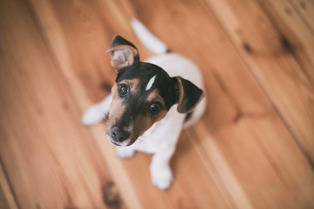Die besten Hundenamen und Rassen im Überblick