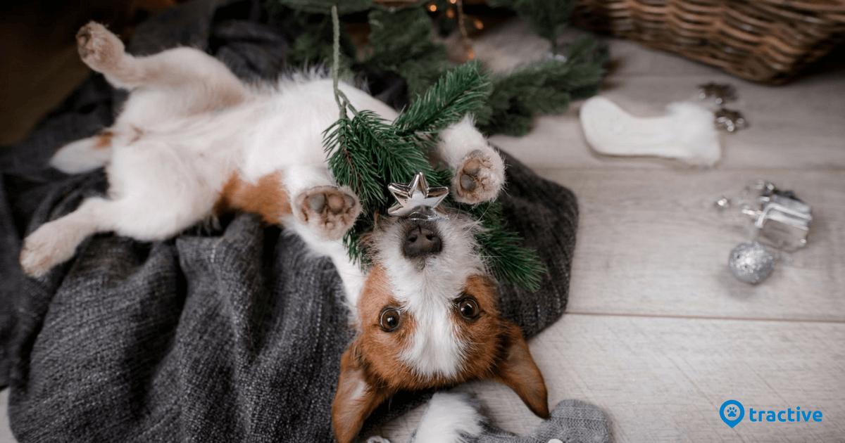 Spanish Christmas Tree