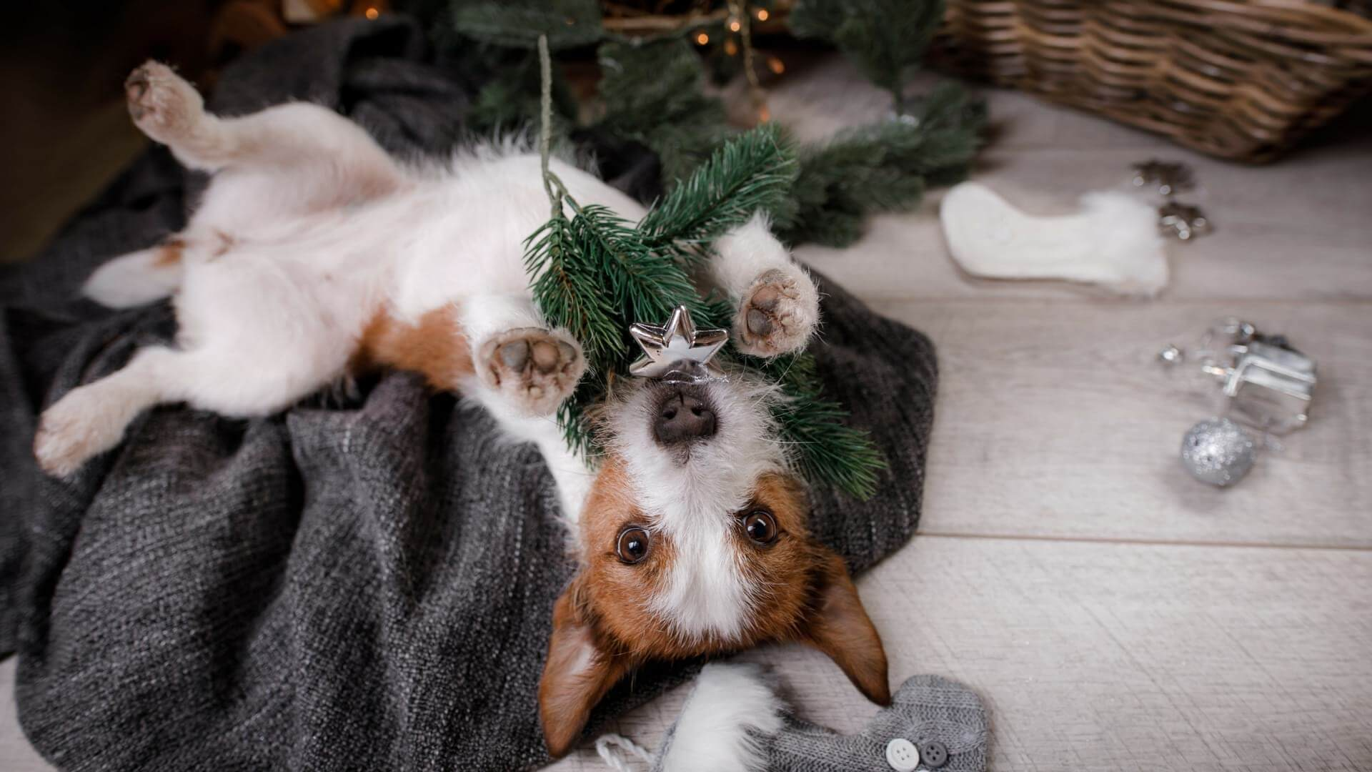 How do I keep my dog away from a Christmas tree?