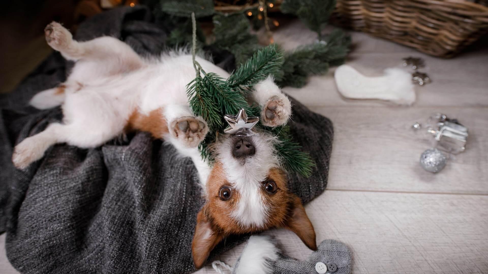Image result for christmas tree dog