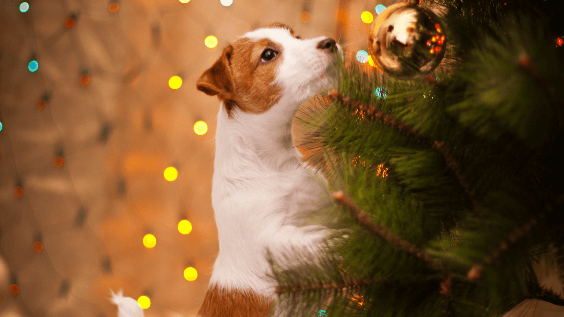 Dogs And Christmas Trees Pay Attention To This Tractive