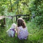 Garten für Hunde: Gib auf diese Dinge Acht