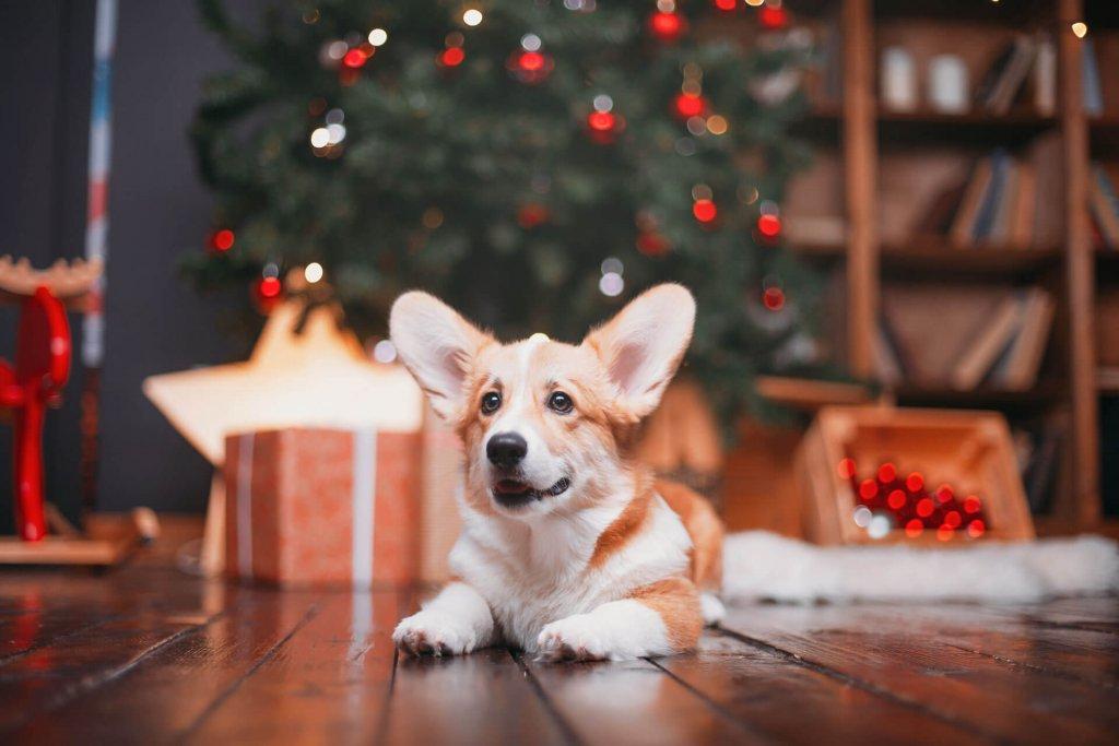 Fröhlicher Hund mit Geschenken unter Weihnachtsbaum