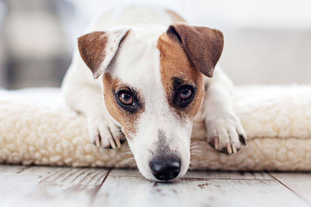 Die 3 besten Tricks, damit du deinen Hund ohne schlechtes Gewissen alleine lassen kannst