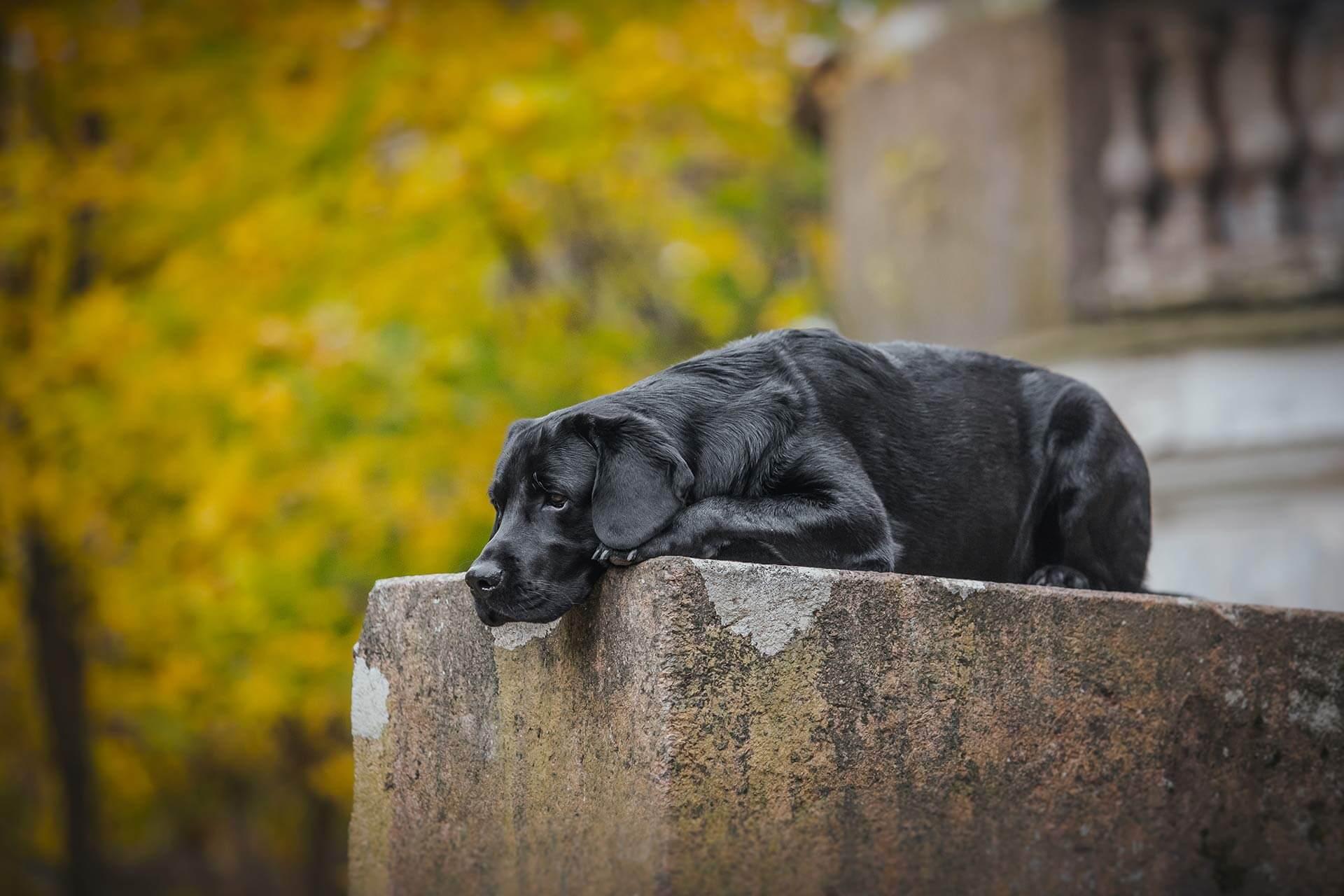 Hund einschläfern Ablauf: Alles was du wissen musst