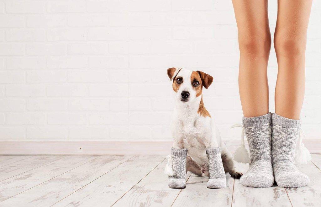 Hund klaut Socken - finde jetzt heraus warum er das tut