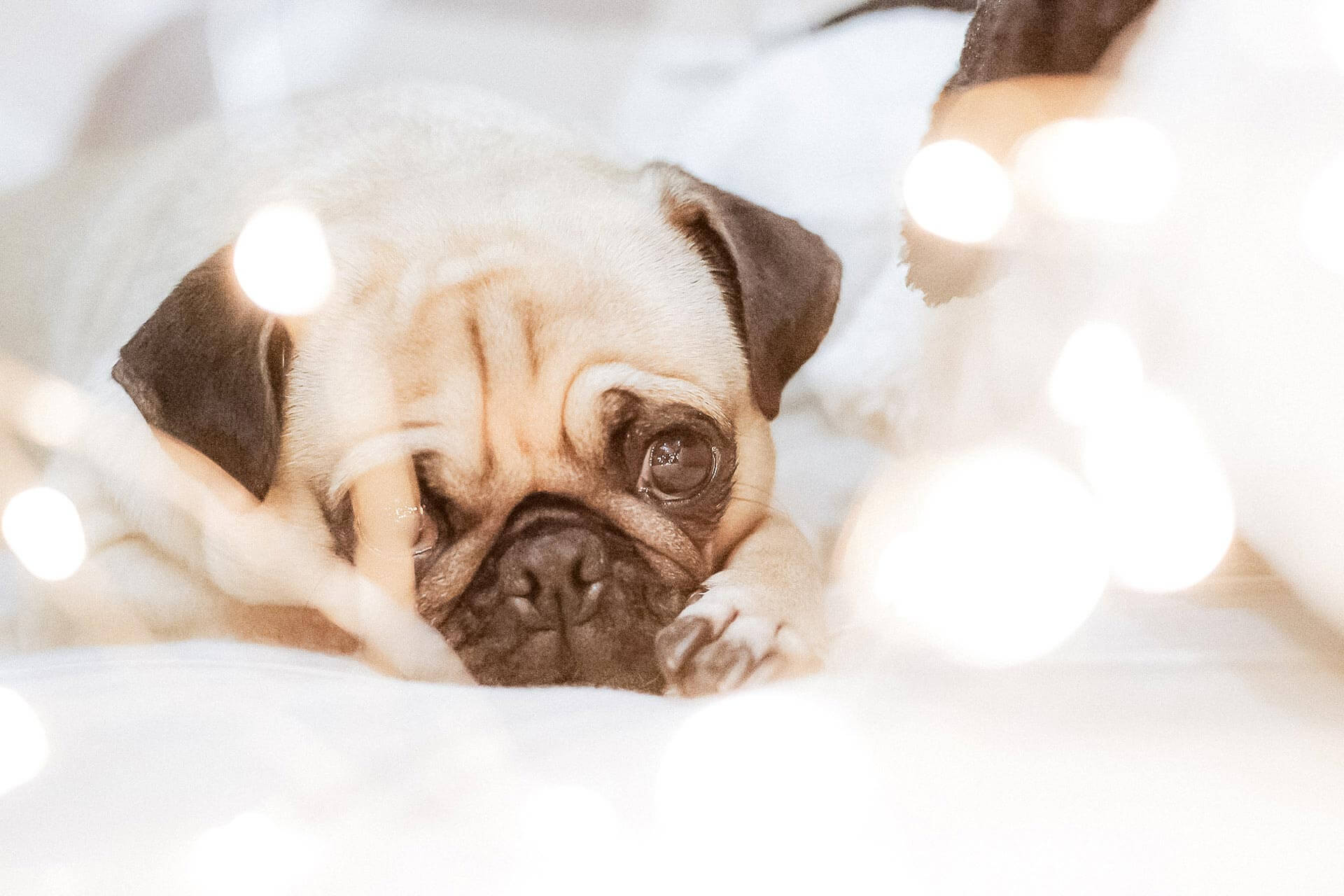 Hund klaut Socken - Gründe warum dein Hund das tut