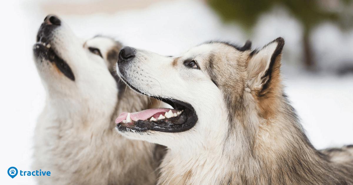 Hunde Im Winter Draussen Halten Beachte Das Tractive