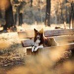 Scheidungshund - wer darf den Hund nach der Scheidung behalten