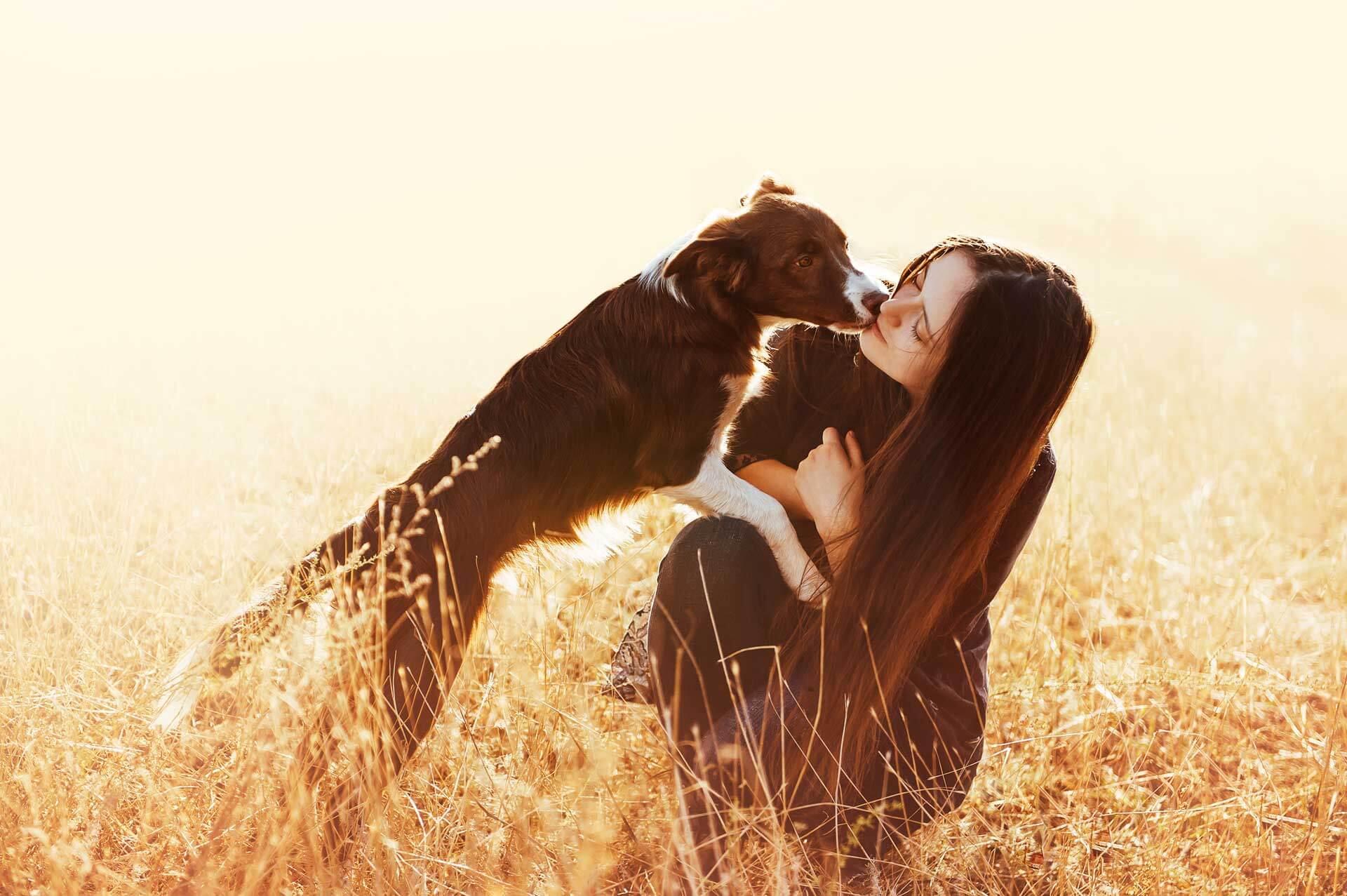 Scheidungshund wer darf den Hund behalten