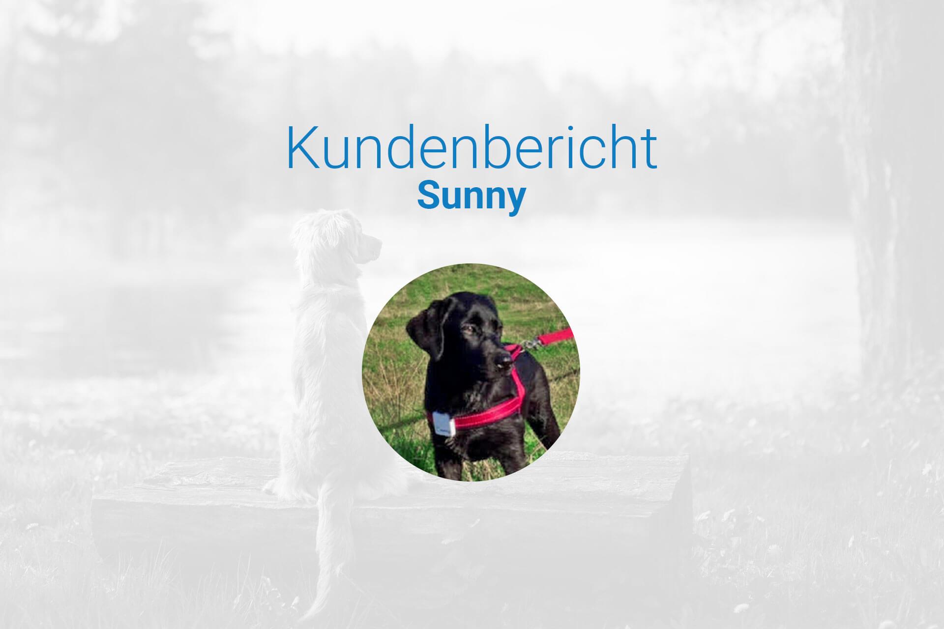 Urlaub mit Hund Dänemark - ein Erfahrungsbericht über Tractive GPS Ortungsgeräte