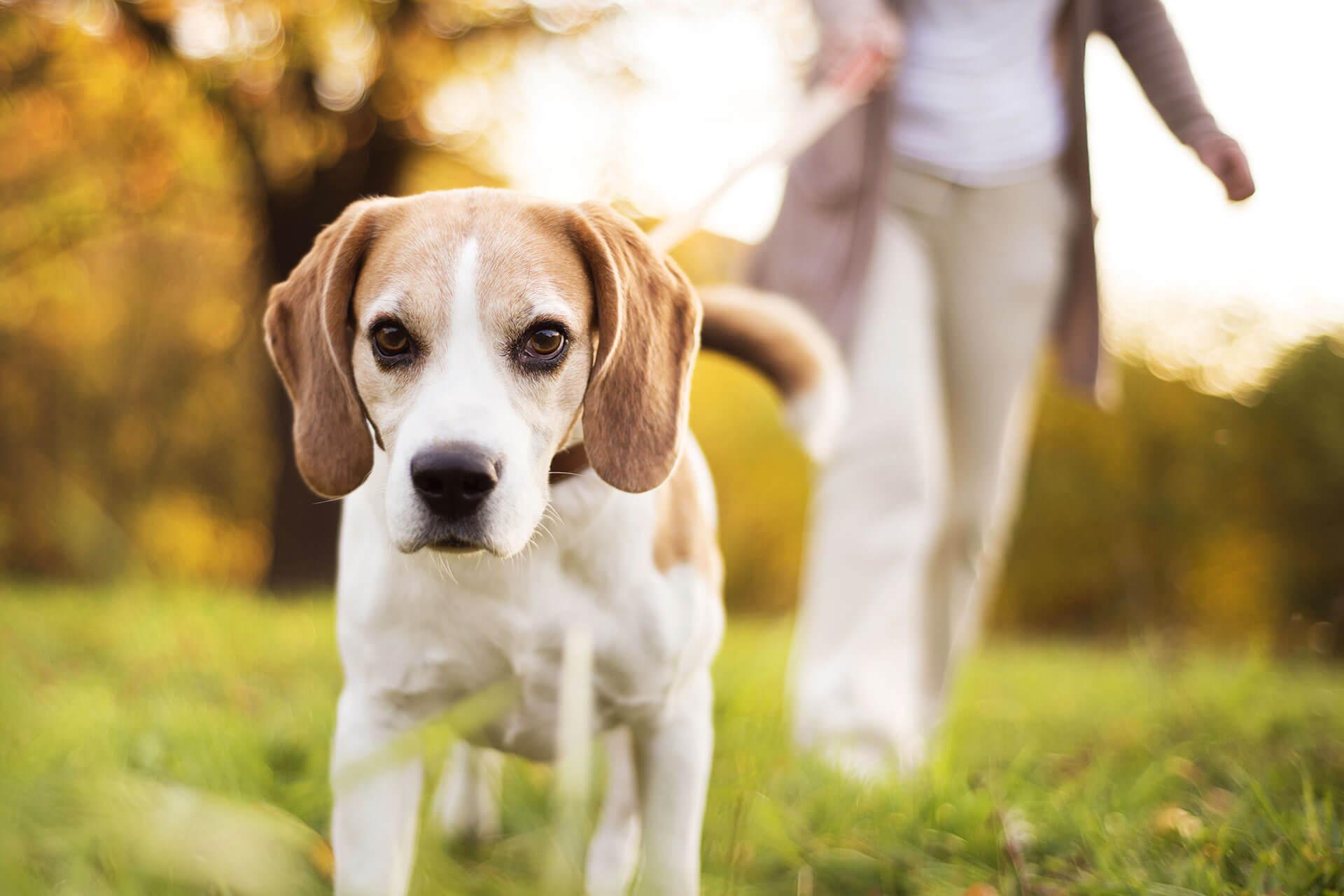 Vorbereitungen, wenn du deinen Hund alleine lassen kannst