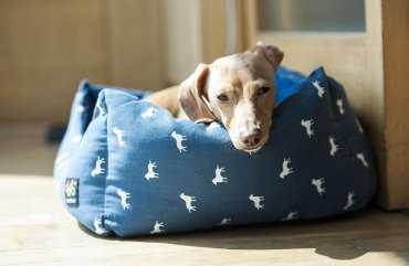 Was tun wenn der Hund stinkt - Liegeplatz reinigen