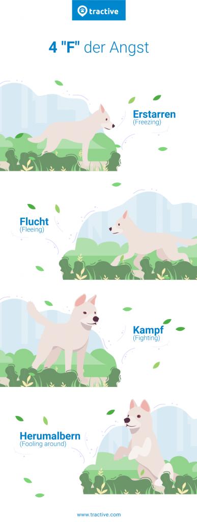 4 F der Angst bei Angsthunden