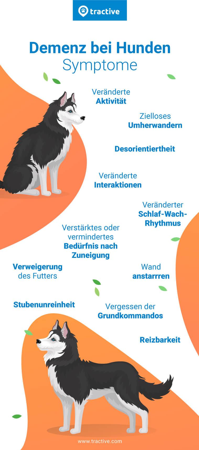 Infografik mit möglichen Symptomen bei Demenz bei Hunden