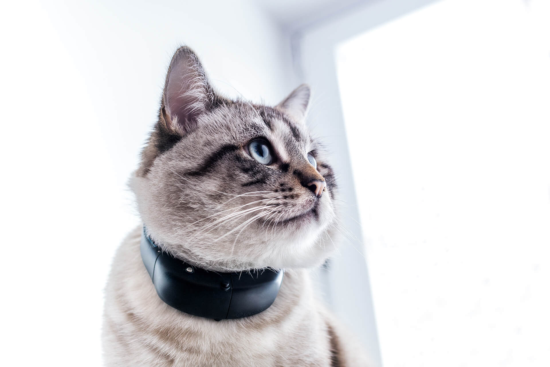 Tractive GPS Cat Tracker at CES
