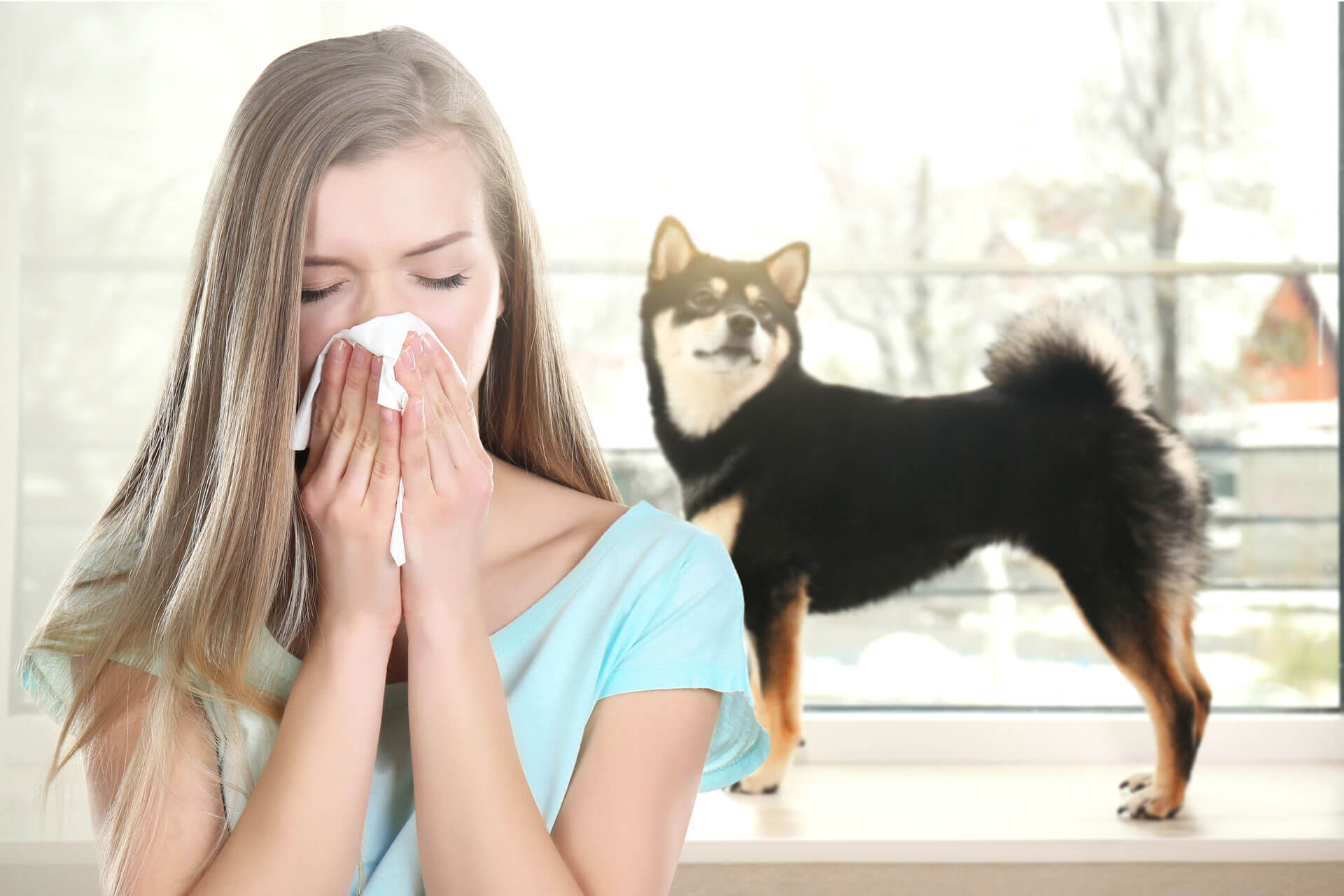 Can My Dog Catch My Cold? Get this answered once and for all!