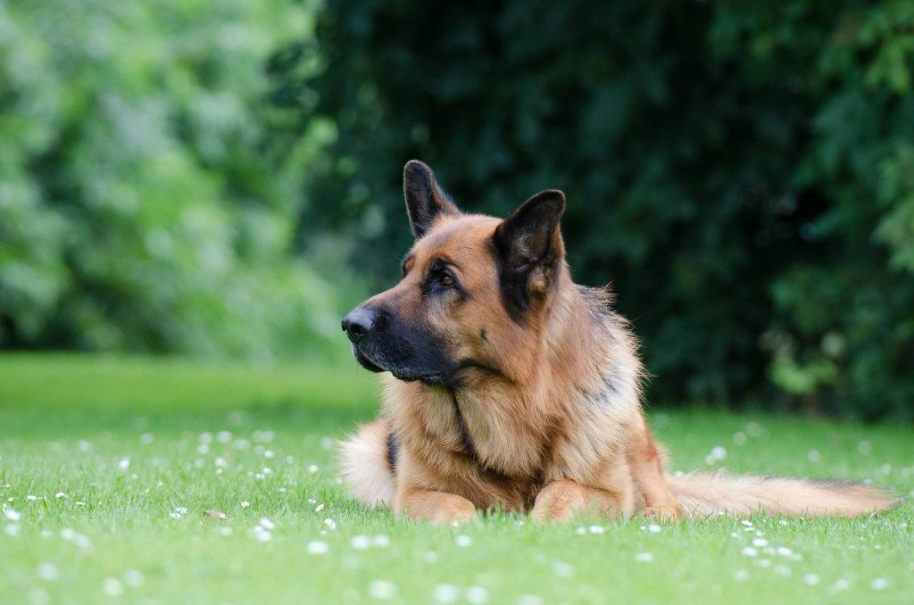 Darmverschluss Hund: Ursachen, Symptome & Behandlung