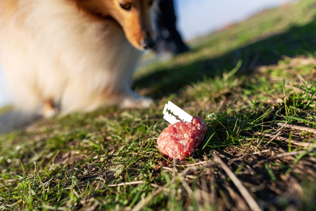 examples-of-dog-poison-food-met-during-dog-walks
