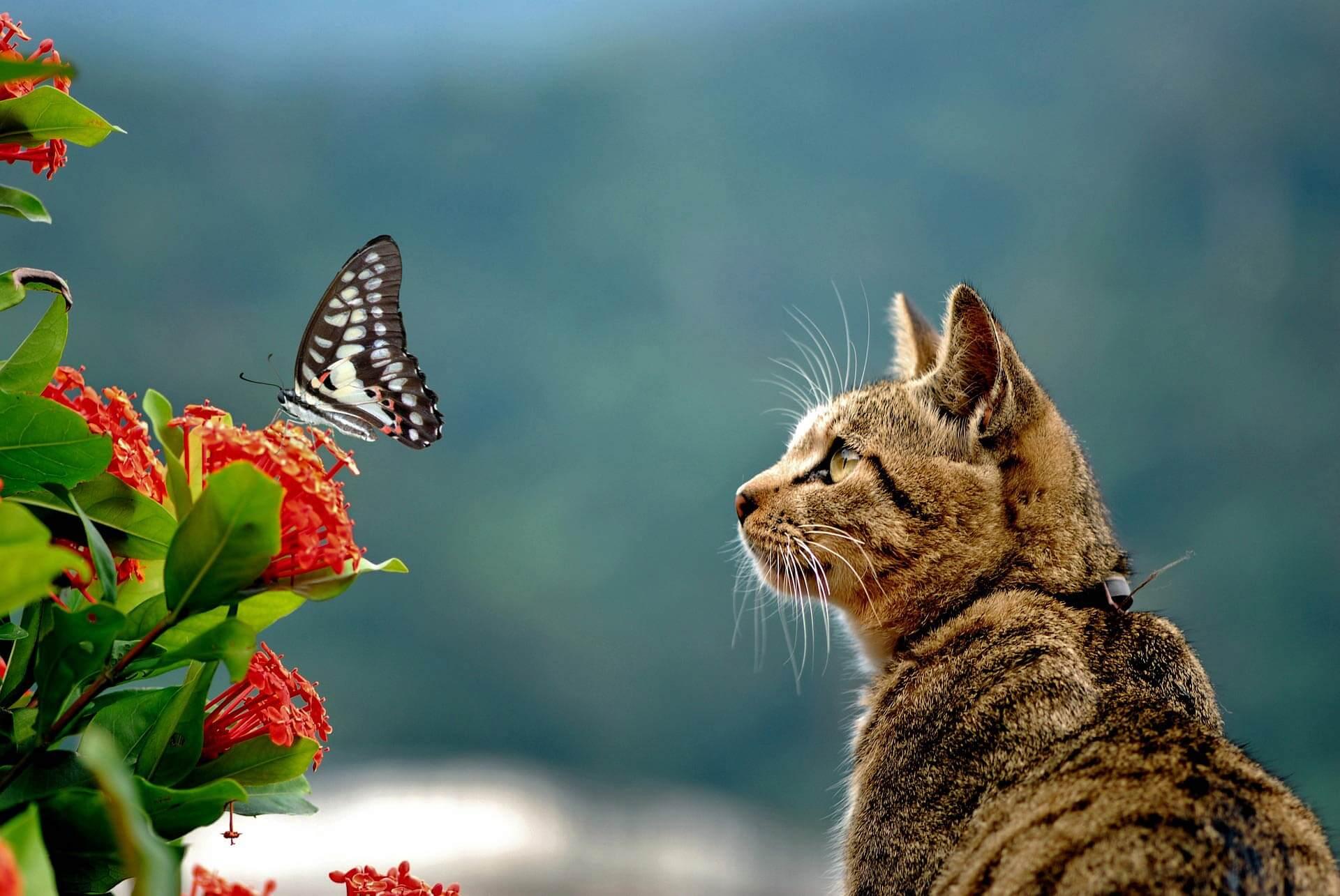 Gefahren für Katzen: 5 Todesfallen für deine Katze