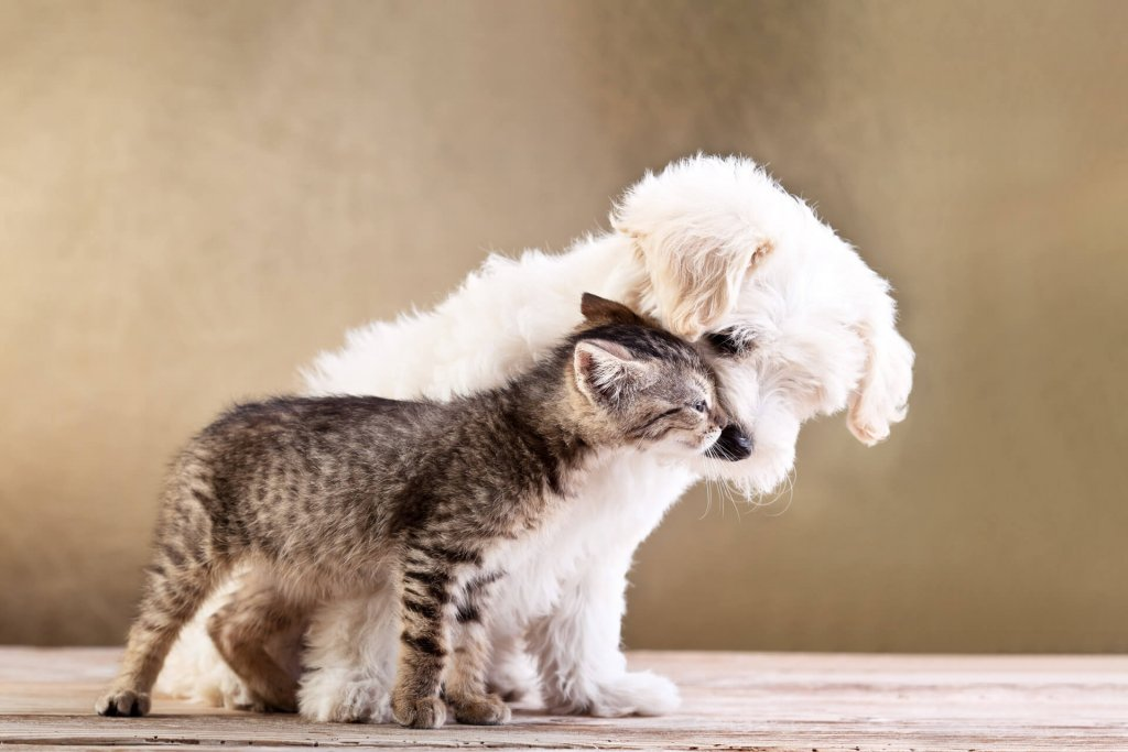 white fluffy puppy and small brown/grey kitten