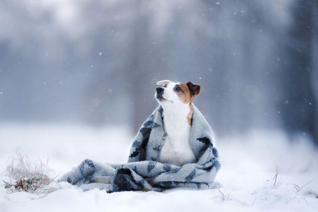 Hund friert: Ab dieser Temperatur leidet dein Hund