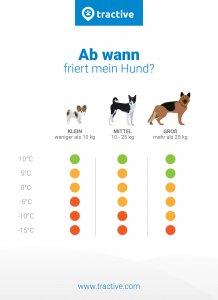 Hund friert - wann ist es zu kalt