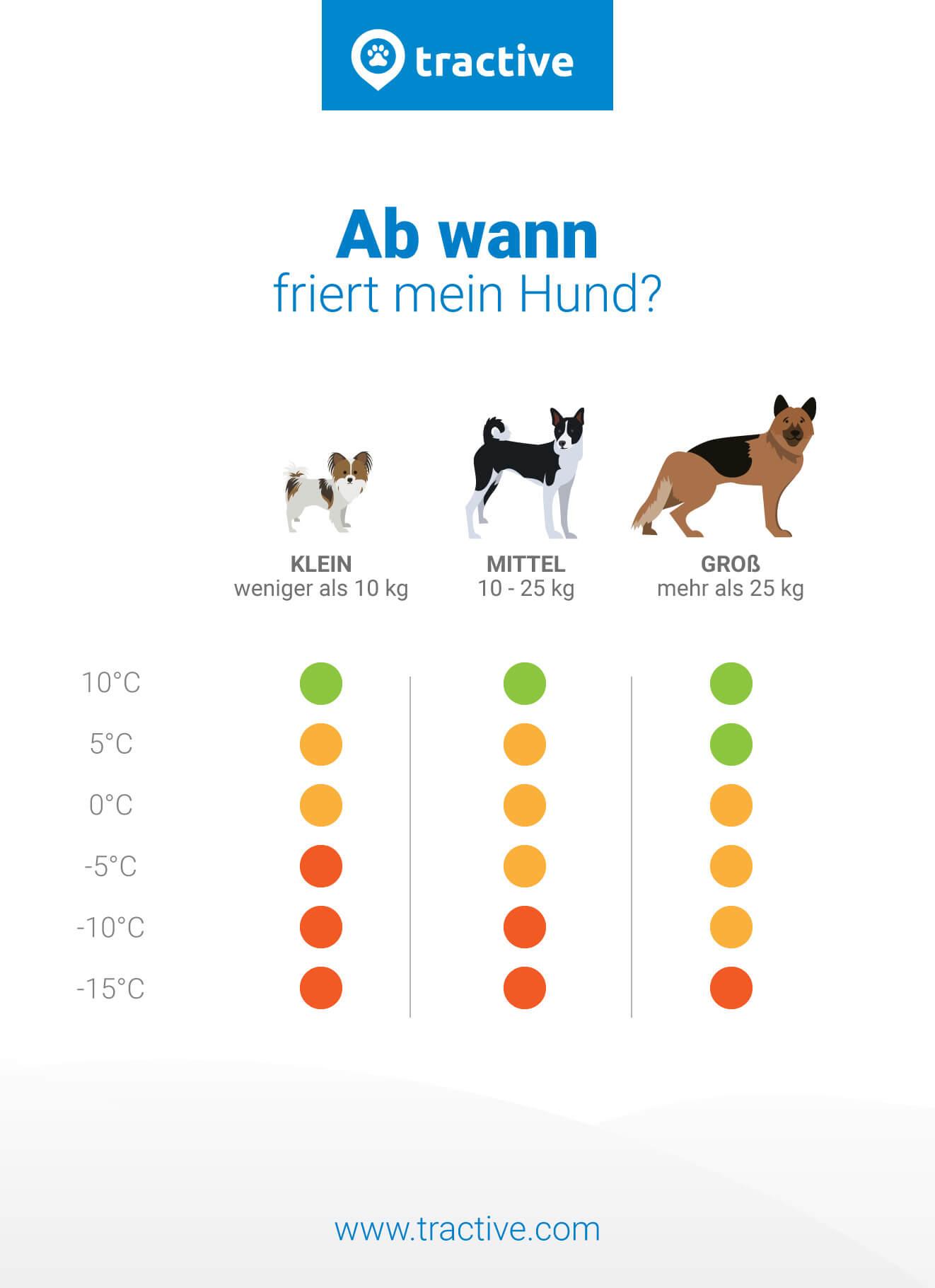 hund friert wann ist es zu kalt tractive. Black Bedroom Furniture Sets. Home Design Ideas