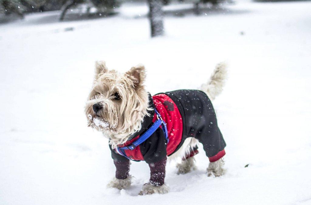 Hundewintermantel: So wählst du die perfekte Hundejacke aus