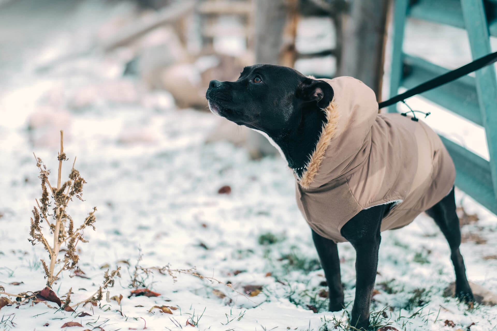 Hundewintermantel - in wenigen Schritten zur perfekten Hundejacke