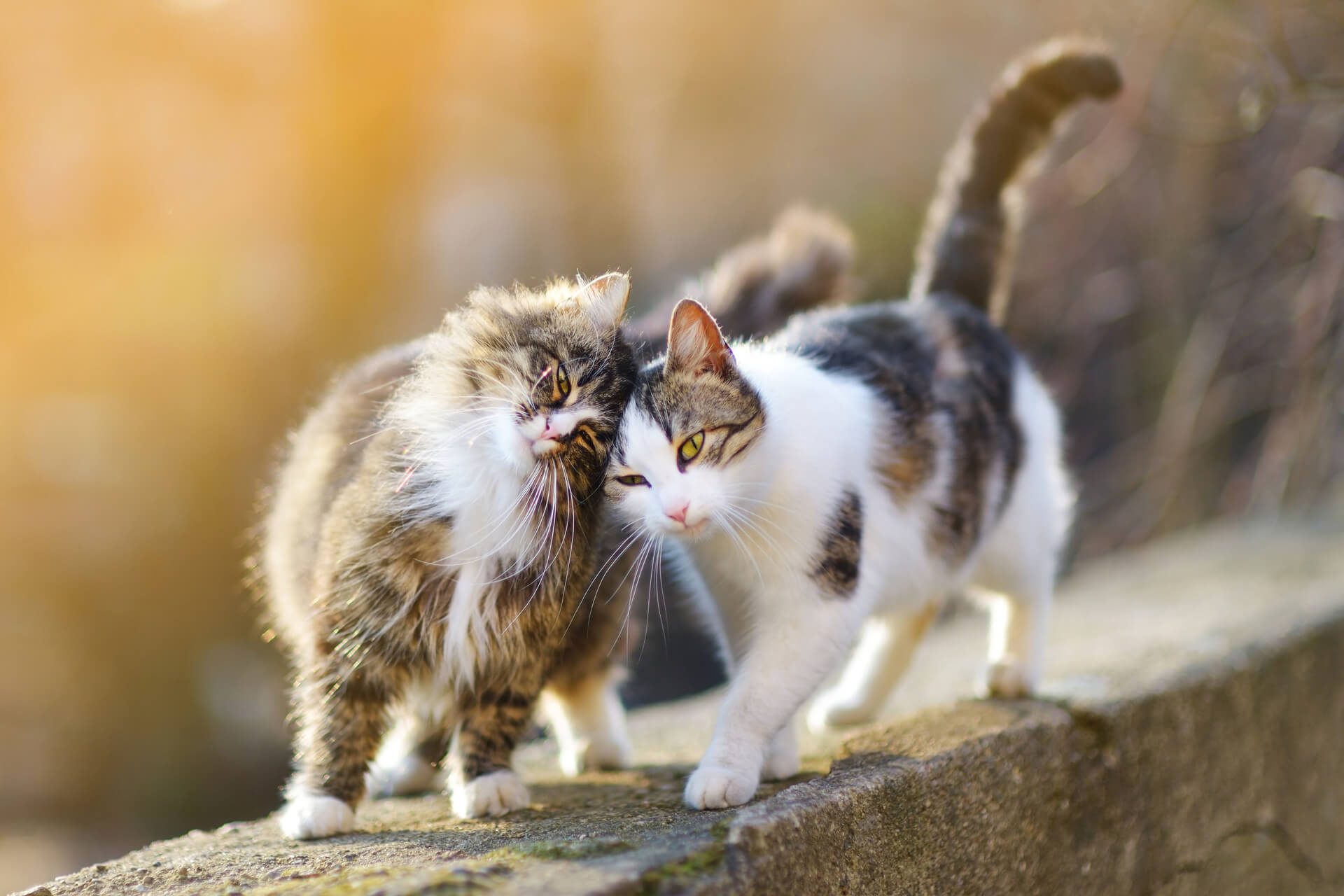 two cats nuzzling each other outside on stone wall - international cat day