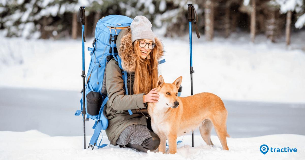 skiurlaub mit hund tipps f r unbeschwerte tage tractive. Black Bedroom Furniture Sets. Home Design Ideas