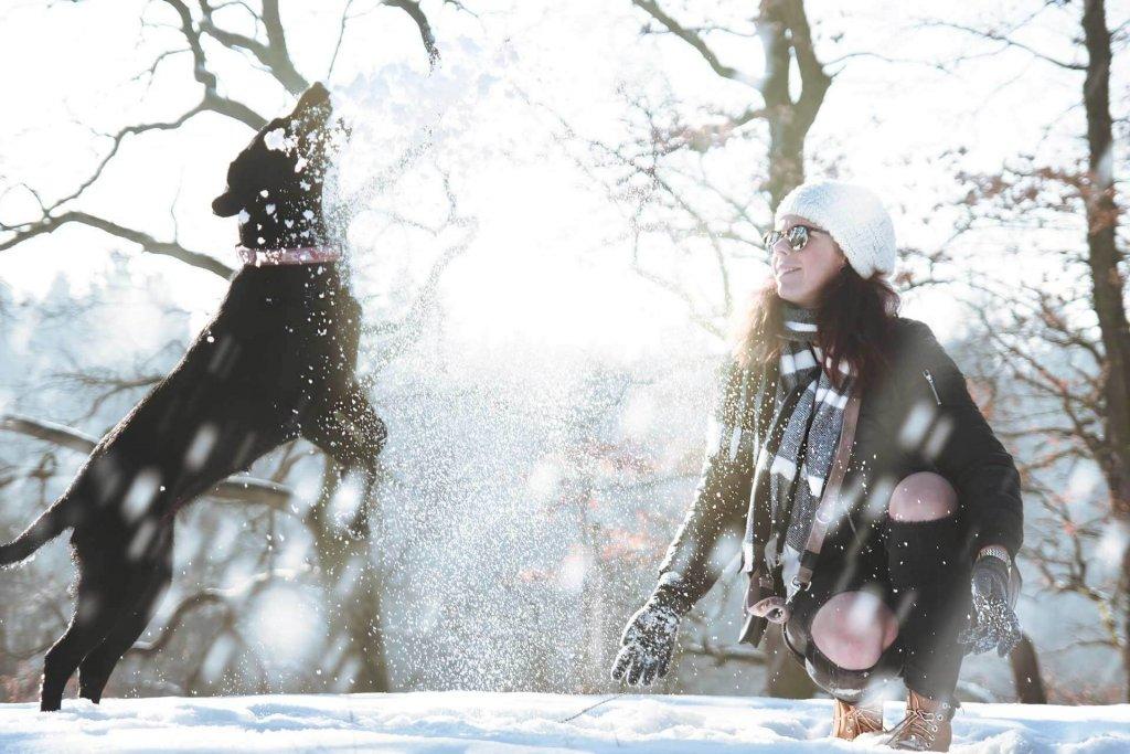 Snow-Loving Dogs