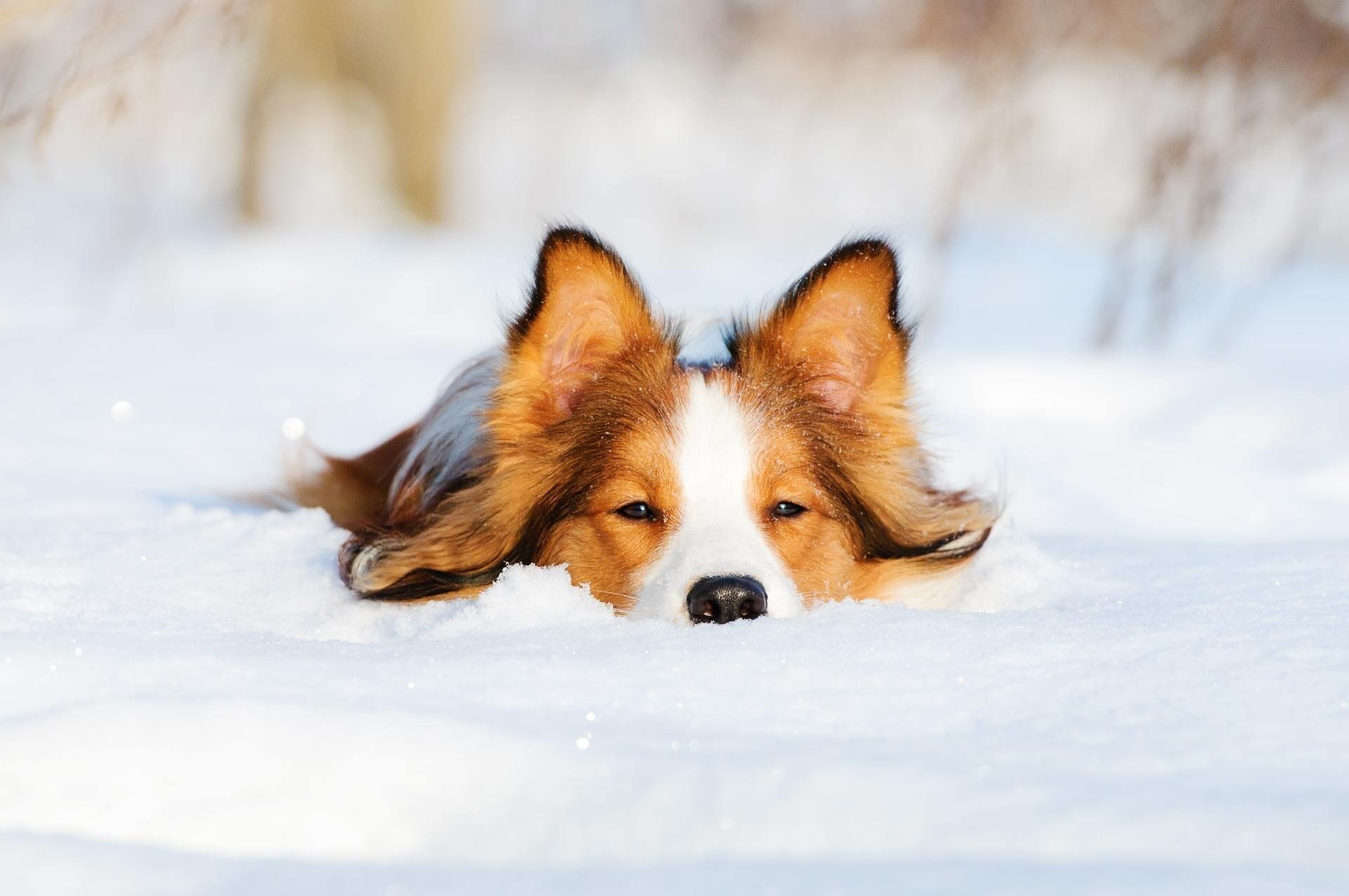 So planst du den perfekten Skiurlaub mit Hund