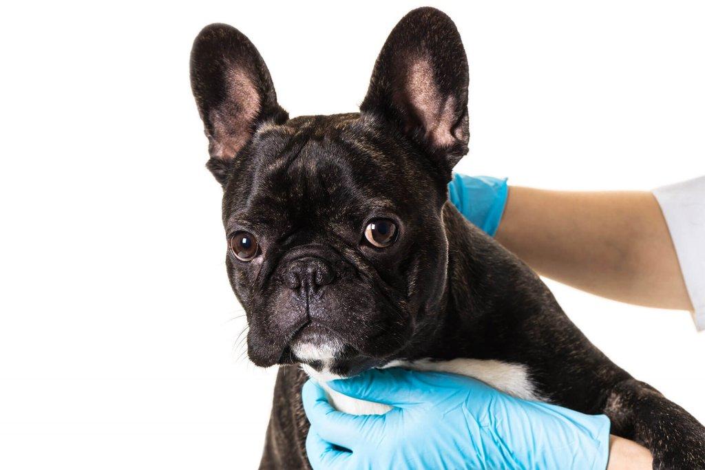 Tierarztcheck Insektenstich beim Hund