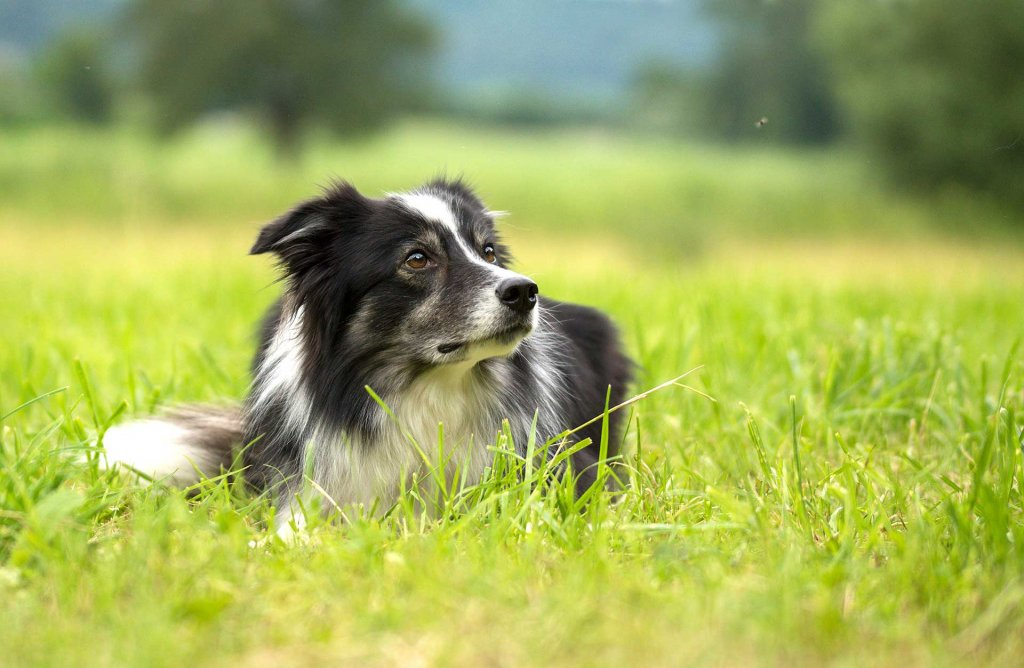 Train your dog: The importance of consistency in dog training