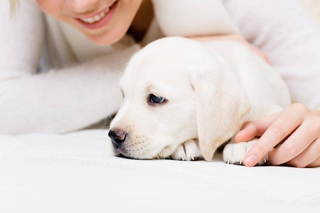 Erziehung von Hunden