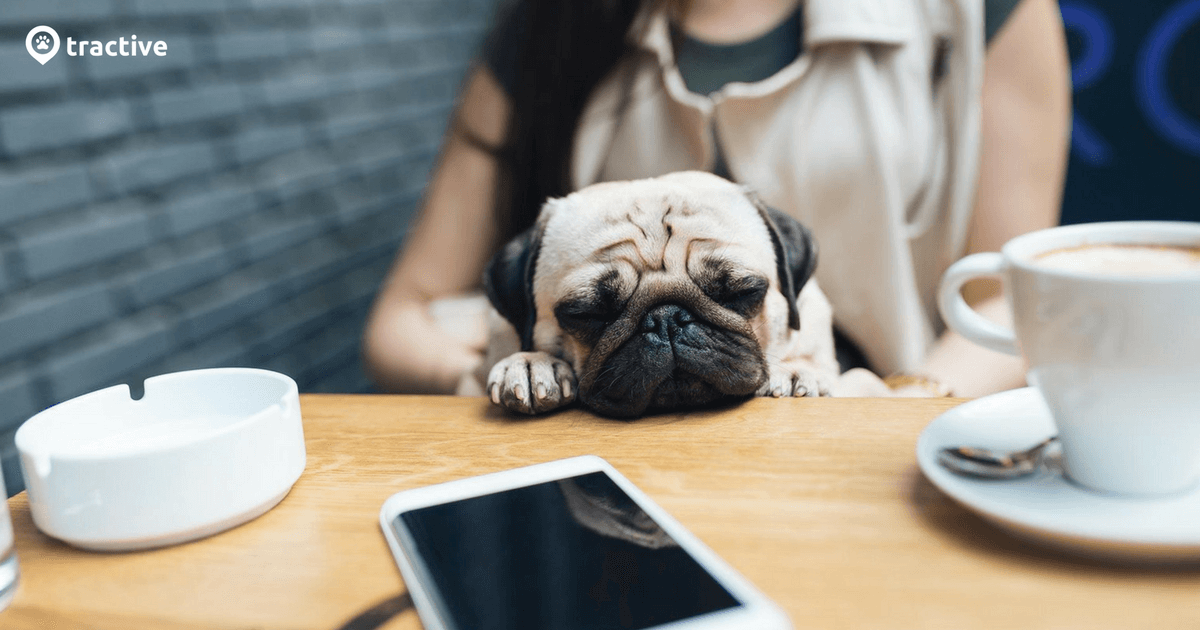 Dog cafe: Tips & tricks to keep your pet calm | Tractive