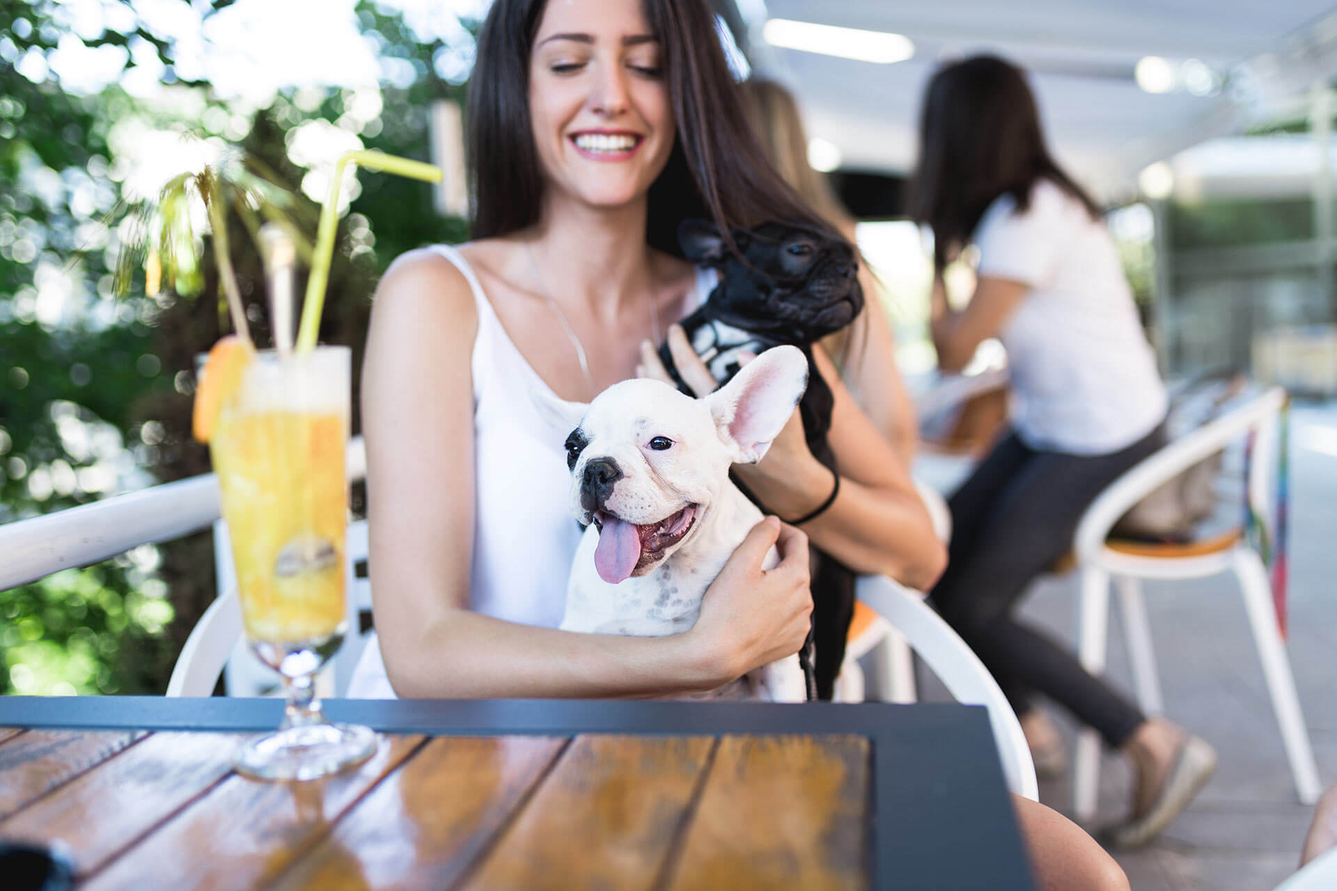 dog cafe tips and tricks to keep your dog calm