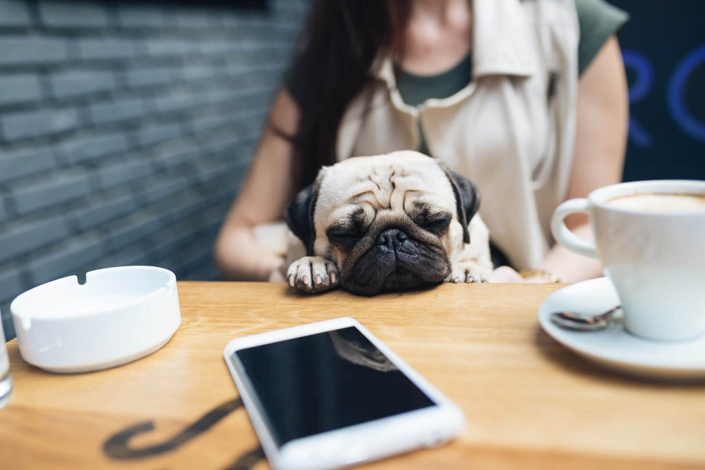 dog cafe tips and tricks keep calm