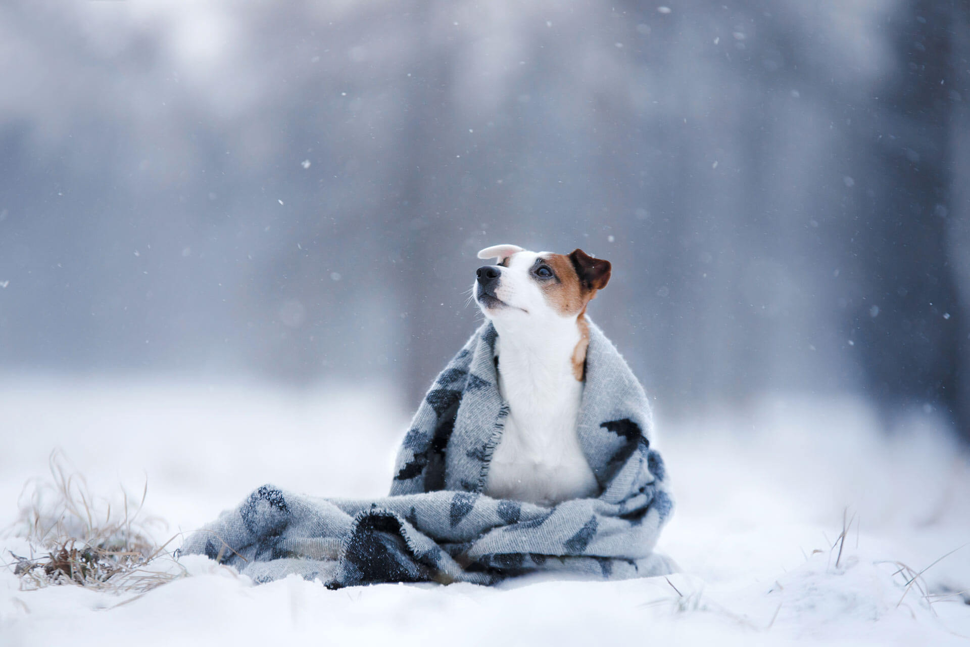 cold weather pictures