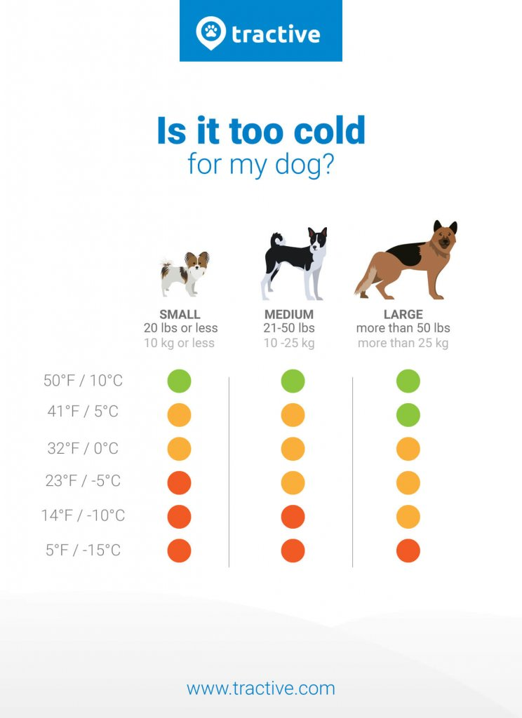 how cold is too cold for dogs - infographic of temperatures which are safe, okay, and too cold for dogs
