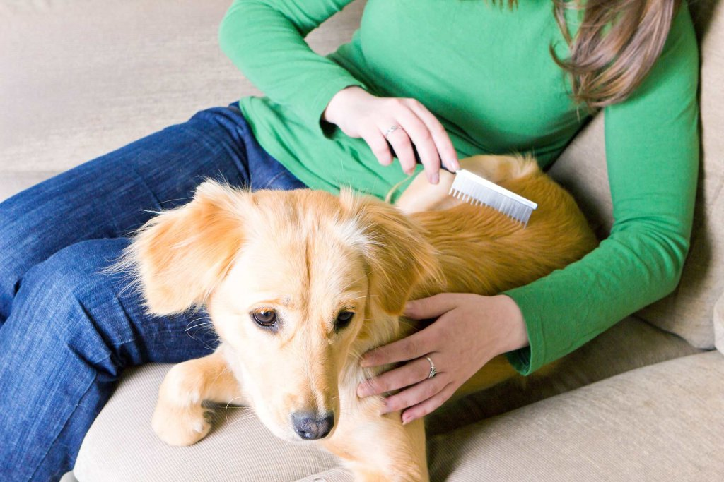Tips and tricks against itchiness when your dog is losing fur