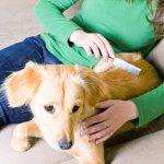 Fellwechsel beim Hund - so übersteht ihr es gemeinsam