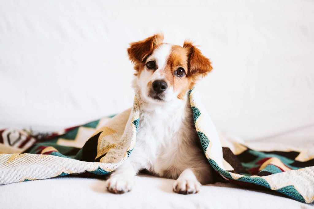 Best tips to protect your doggie's paws in the cold season