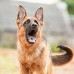 hund aggressiv gegen menschen