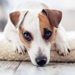best tips for leaving your dog home alone